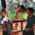 Visiting the giraffes in Kenya.