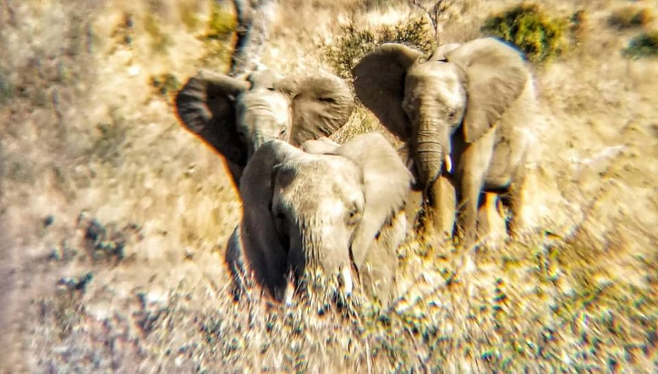 African Tour - Kruger Park Safari.