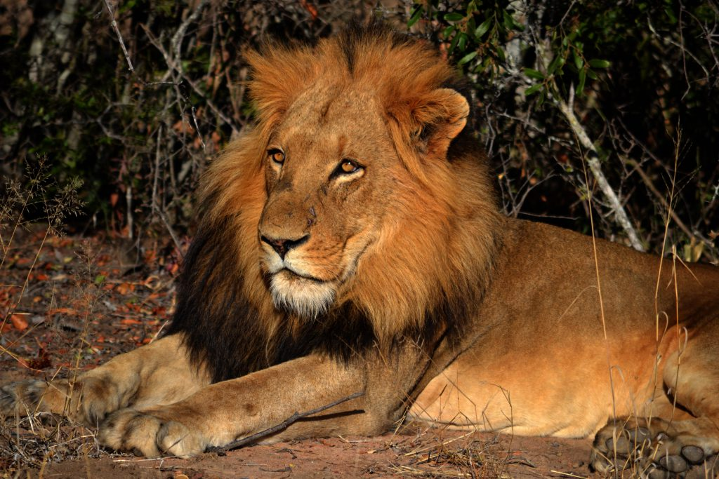 South africa tour. Safari and holiday trip.