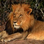 Safari Kruger National Parker